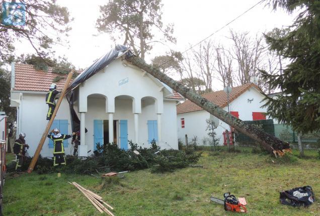 L'arbre de vingt mètres est tombé sur la maison